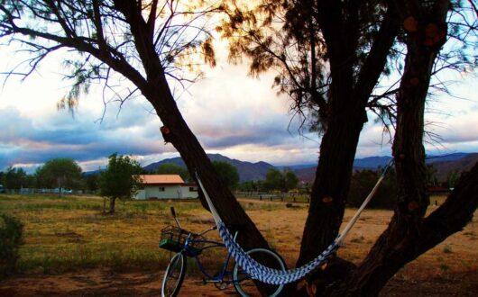 A peaceful evening view of a bicycle and hammock under a tree