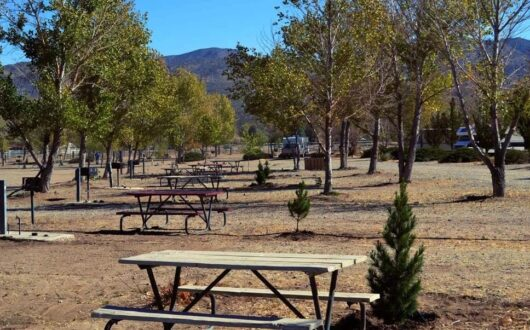 A row of picnic tables in the camground