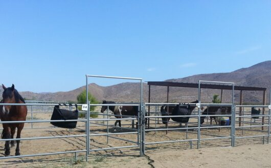Horses standing in their pipe corrals at Stagecoach Trails campground and horsecamp