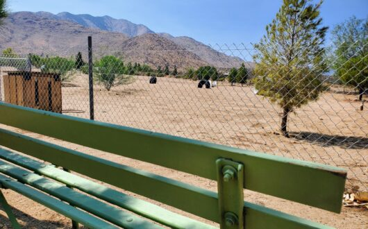 A view from the bench outside the doggie park at stagecoach trails